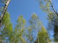 drzewokrzew_626