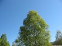 drzewokrzew_629