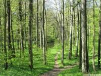 drzewokrzew_631
