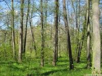 drzewokrzew_635