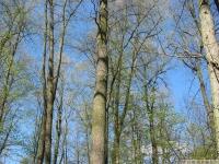 drzewokrzew_636
