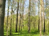 drzewokrzew_637