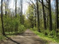drzewokrzew_638