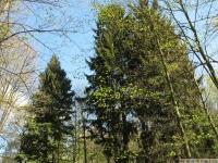 drzewokrzew_639