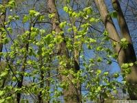 drzewokrzew_641