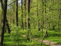 drzewokrzew_642