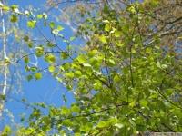 drzewokrzew_646