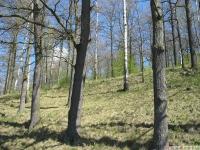 drzewokrzew_647