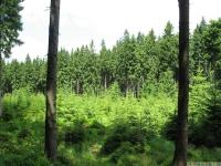 drzewokrzew_653