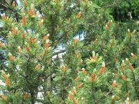 drzewokrzew_656