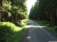 drzewokrzew_662