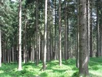 drzewokrzew_663
