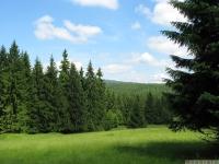 drzewokrzew_667