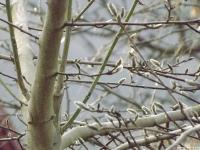 drzewokrzew_674