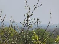 drzewokrzew_679