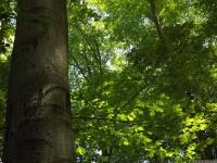 drzewokrzew_683