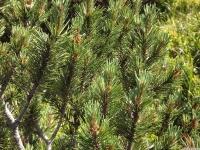 drzewokrzew_689