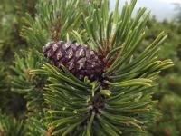 drzewokrzew_690