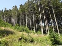 drzewokrzew_691
