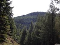 drzewokrzew_693