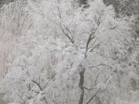 drzewokrzew_703