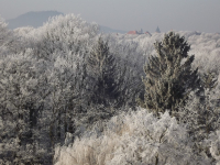 drzewokrzew_705