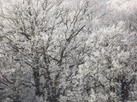 drzewokrzew_707