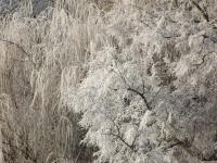 drzewokrzew_710