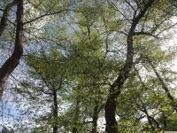 drzewokrzew_968