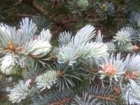 drzewokrzew_972