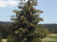 drzewokrzew_993