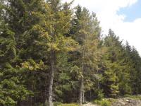 drzewokrzew_997