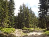 drzewokrzew_998