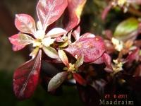 kwiat_014