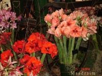 kwiat_017
