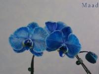 kwiat_025