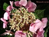 kwiat_026