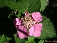 kwiat_027