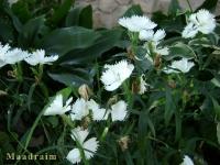 kwiat_028