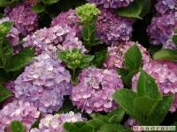 kwiat_031