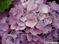 kwiat_032