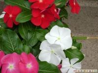 kwiat_033