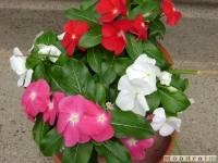kwiat_034
