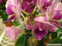 kwiat_039