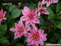 kwiat_043