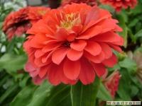 kwiat_045