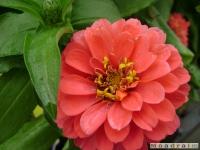 kwiat_046