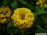 kwiat_047