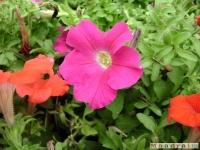 kwiat_049