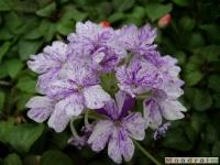 kwiat_050
